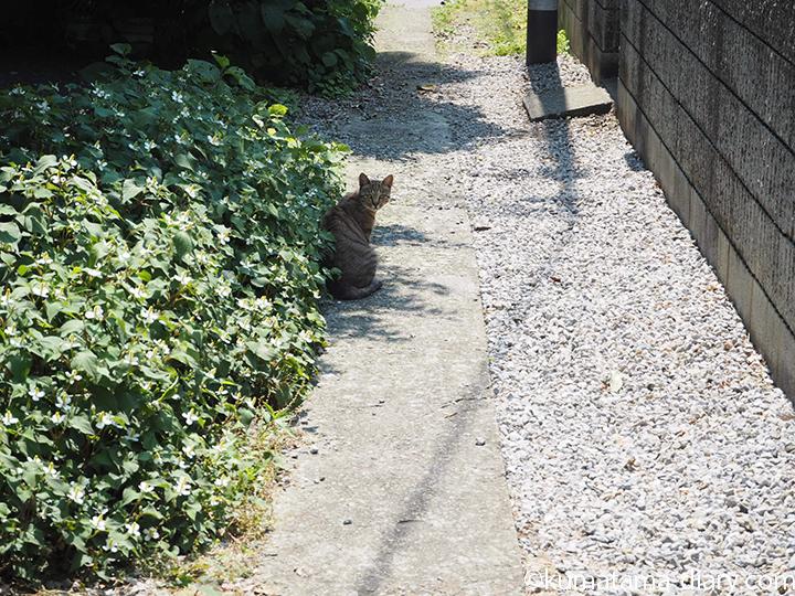 こっちを向く猫さん