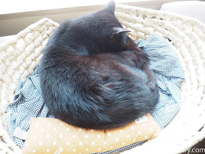 かごで眠るくま