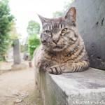 【巣鴨】染井霊園の茶トラ猫さんとキジトラ猫さん