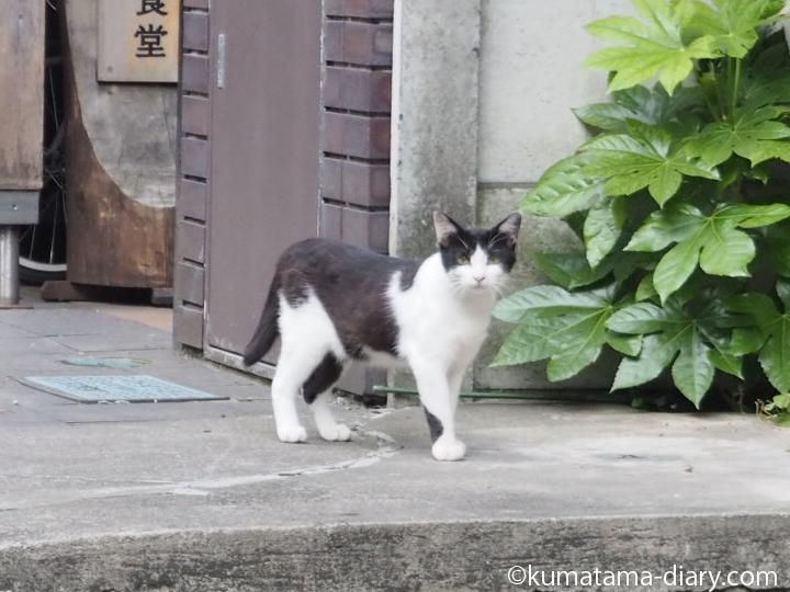 気づいた白黒猫さん
