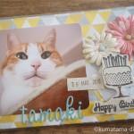 今年も猫の誕生日カードが届きました