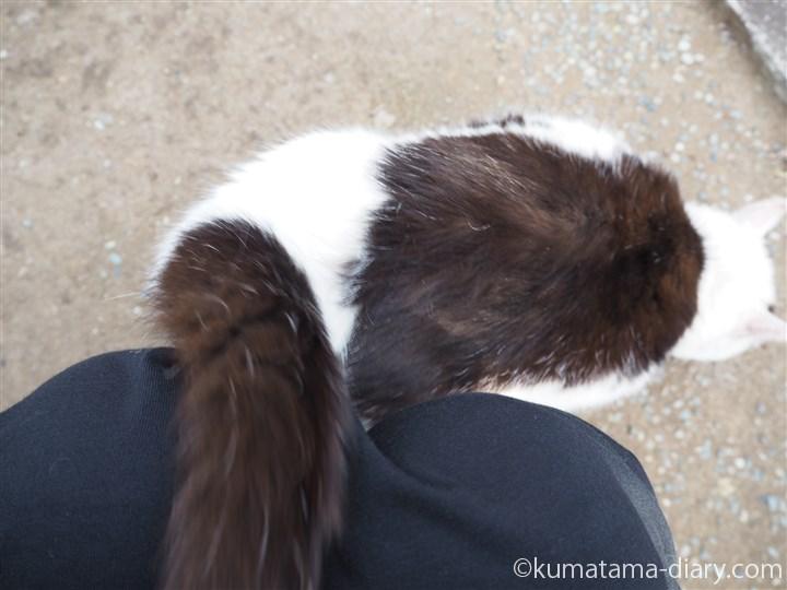 白黒猫さんすりすり
