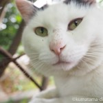 【巣鴨】染井霊園の白黒猫さん