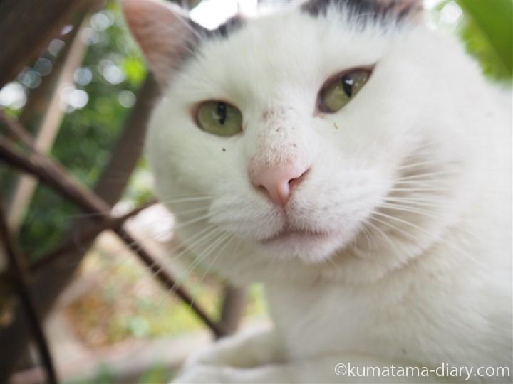 白黒猫さんアップ