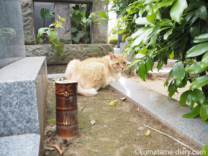 茶トラ猫さん