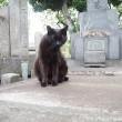 眠そうな黒猫さん