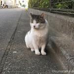 エサを待つ近所のキジトラ白猫さん