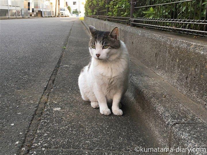 エサを待つキジトラ白猫さん