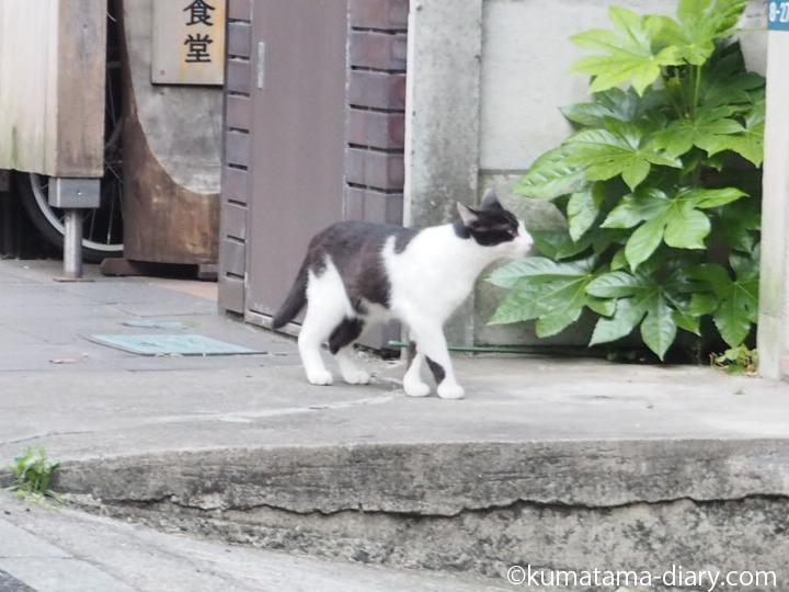 白黒猫さん発見