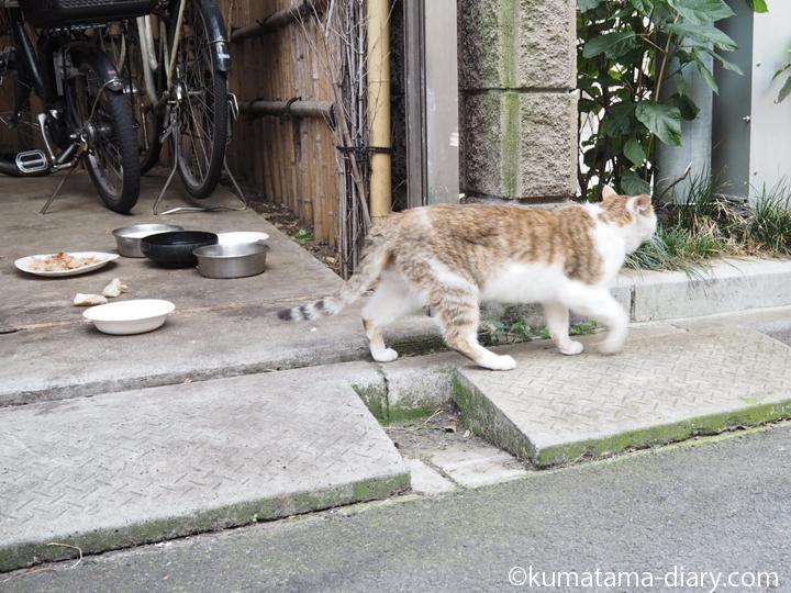 立ち去るキジトラ白猫さん