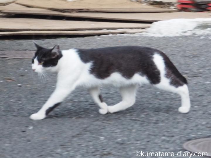逃げる白黒猫さん
