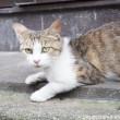玄関前の猫さん顔