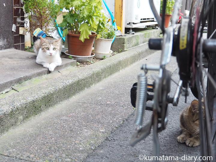 玄関前の猫さん