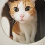 「キャッツデポ」のキャットタワーのボックスが気に入った猫【レビュー】