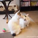 狭山市の保護猫カフェ「funnyCat(ファニーキャット)」のそっくりな猫さんの見分け方