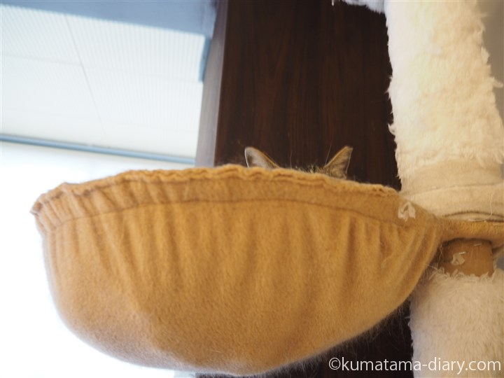 ハンモックの猫さん