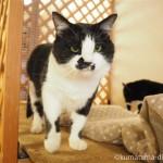 川越市にある保護猫カフェ「ねこかつ」へ行ってきました