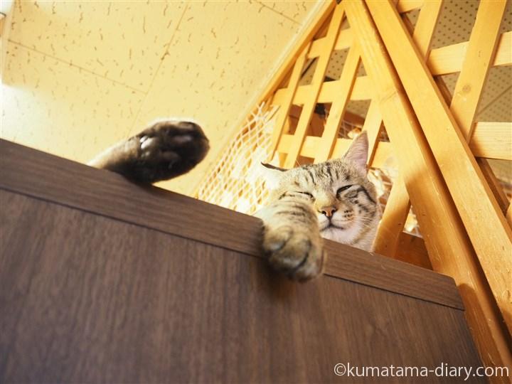 タンスの上のキジトラ猫さん