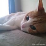 夏の昼間はベッドで一人のびのび寝る猫