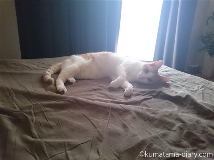 ベッドの上のたまき