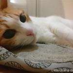 玄関でスリッパを枕に寝る猫