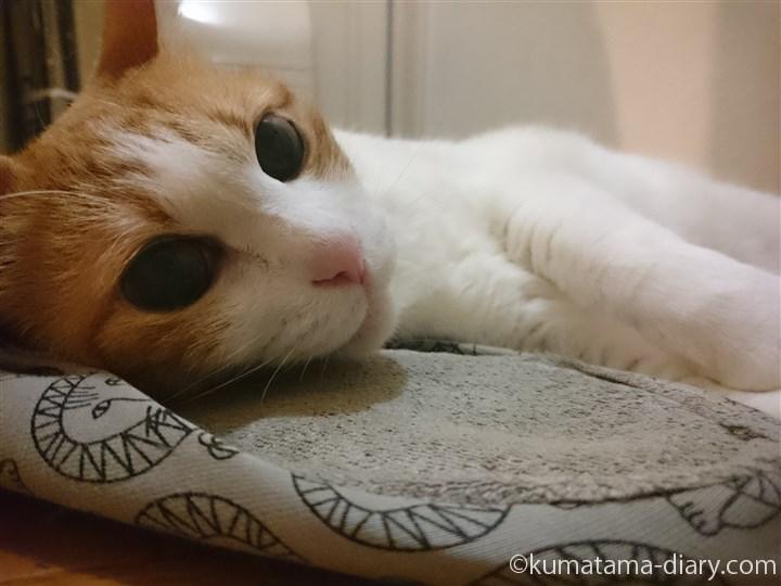 スリッパを枕にするたまき