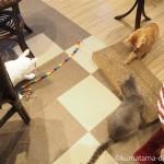 狭山市の保護猫カフェ「funnyCat(ファニーキャット)」の猫さんと猫じゃらしで遊びました