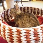 狭山市の保護猫カフェ「funnyCat(ファニーキャット)」でエサを心待ちにする猫さんたち