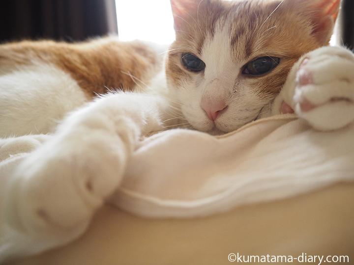 枕の上のたまき