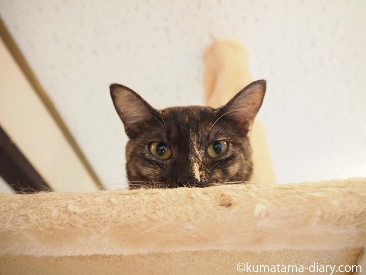 高いところにいる猫さん
