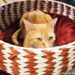 狭山市の保護猫カフェ「funnyCat(ファニーキャット)」の見分けがつかない茶トラ猫さんたち