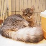 狭山市の保護猫カフェ「funnyCat(ファニーキャット)」の顔がそっくりな猫さんたち