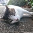 7キジトラ白猫さん顔