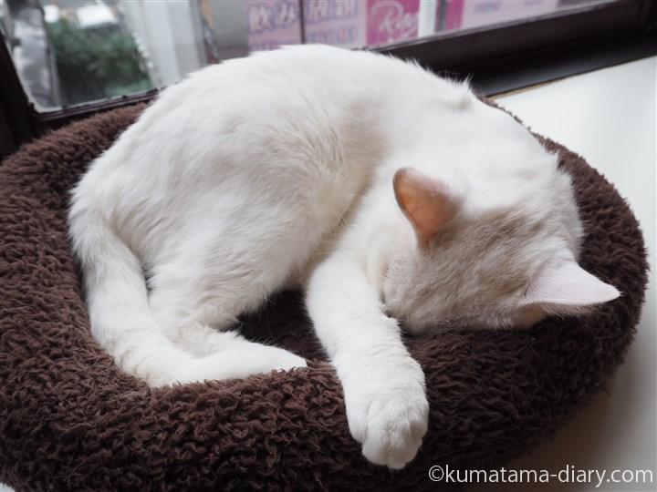 白猫さん爆睡