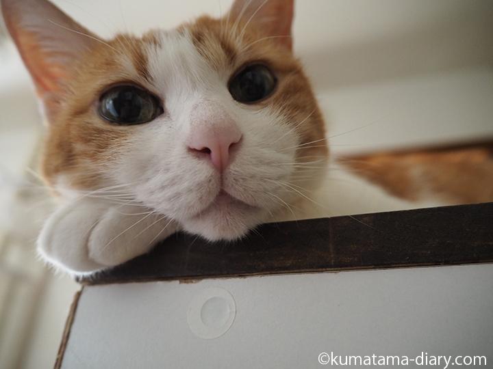 キッチンカウンターの上のたまき