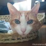 お気に入りのかご「メイズ製ペット用ベッド」であごのせをする猫