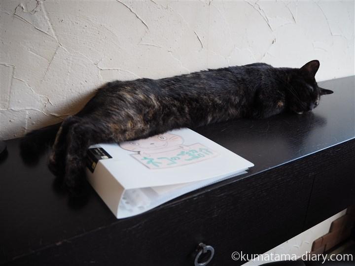 猫紹介ファイル