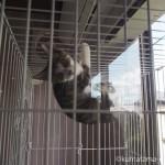 ケージにぶら下がる保護猫カフェ「funnyCat(ファニーキャット)」の子猫さん