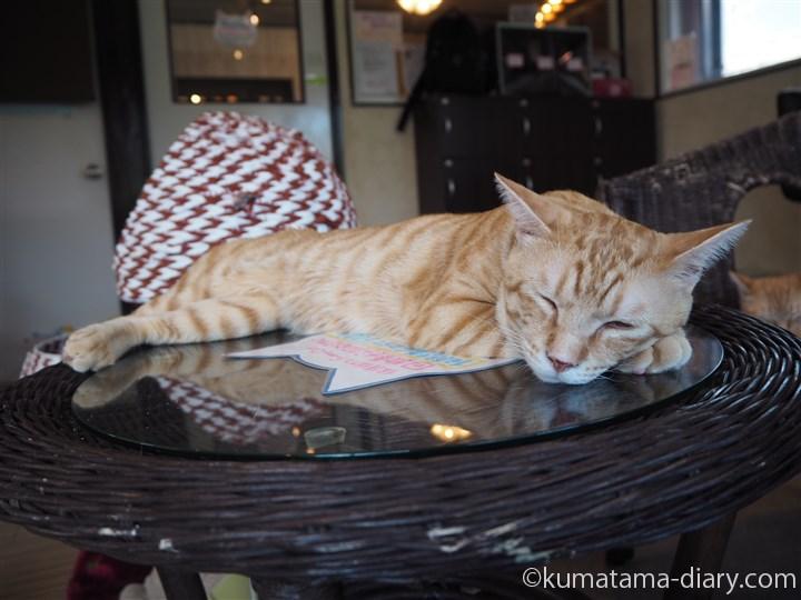 テーブルの上の茶トラ猫さん