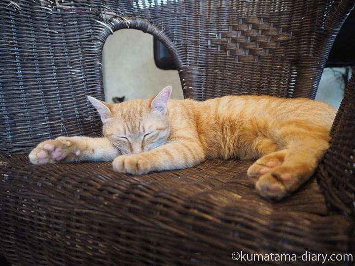 籐椅子の上の茶トラ猫さん