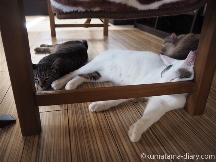 椅子の下の猫さん達