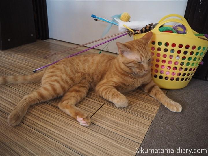 床にいる茶トラ猫さん