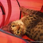 保護猫カフェ「funnyCat」のいろんな場所で寝る猫さんたち