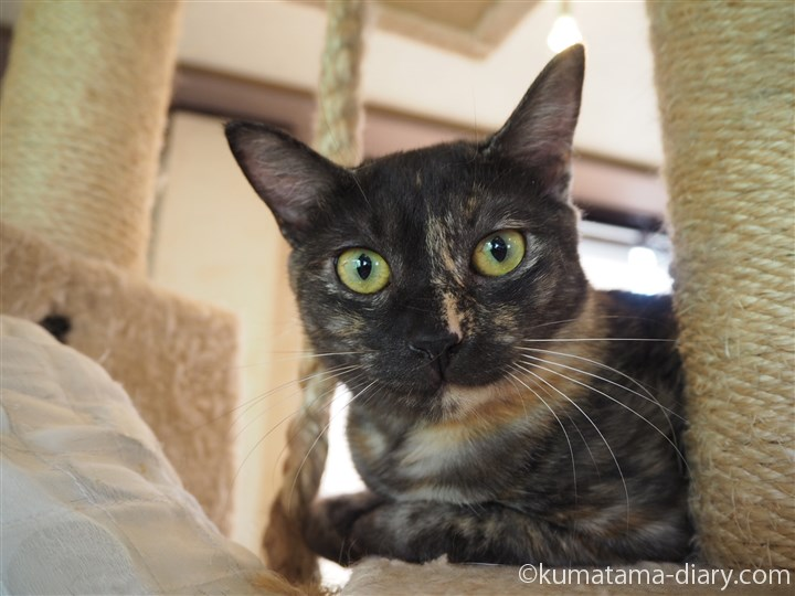 タワーのサビ猫さん