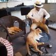 保護猫カフェで眠る彼