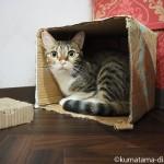 保護猫カフェ「ネコリパブリック東京中野店」の猫さんと彼の微妙な関係