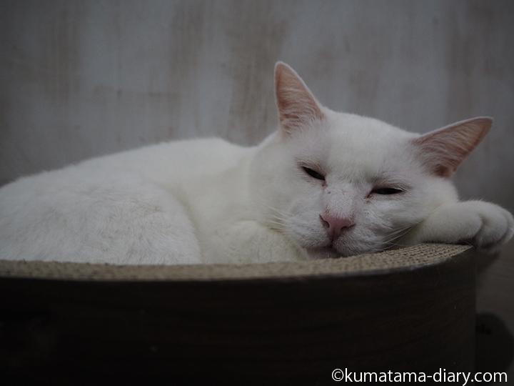 眠る白吉さん