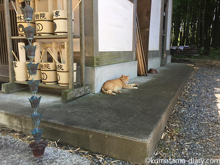 眠る茶トラ猫さん