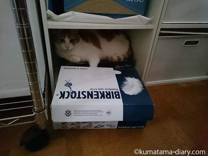 箱を出して入るたまき