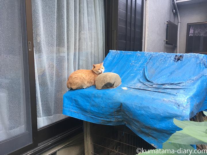 小屋の上の猫さん